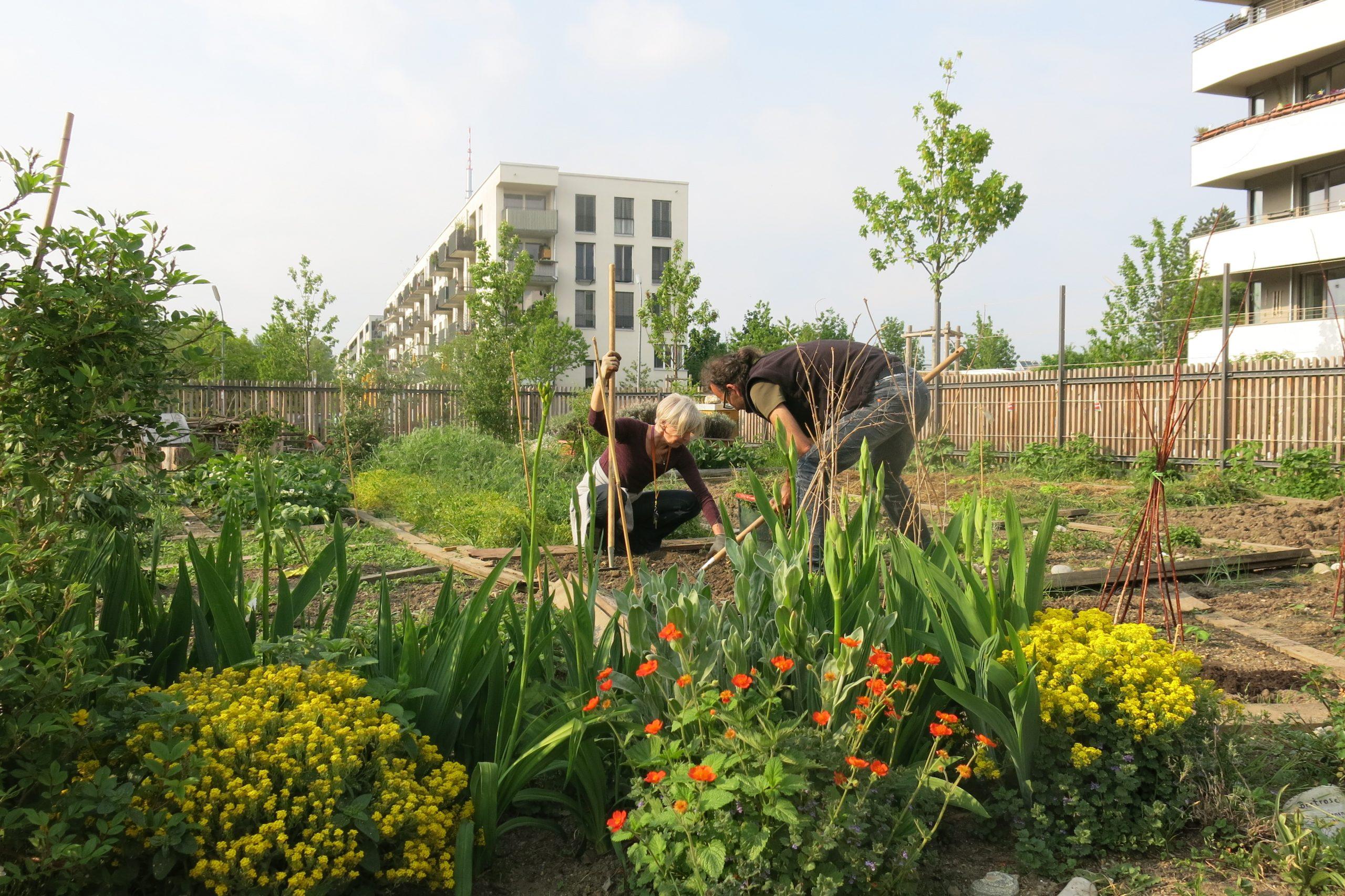 NachbarschaftsBörse am Ackermannbogen: Im StadtAcker wächst Gartenwissen, Gemüse und Gemeinschaft