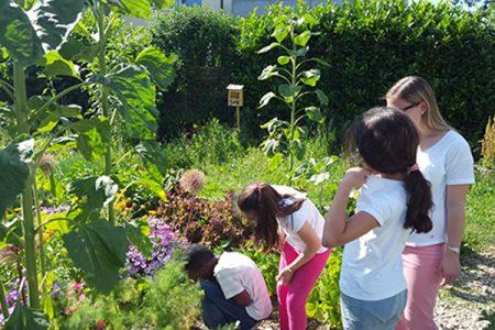 Nachbarschaftstreff Blumenau: Gruppenstunde der Bildungspatenkinder im Interkulturellen Garten